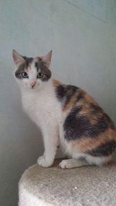 Picsou, chaton femelle 4 mois, à l'adoption -> adoptée