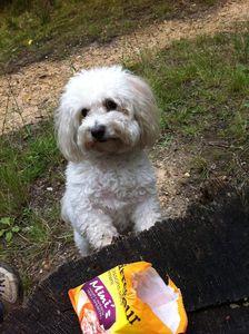 Un livre pour mieux parler chien :-)