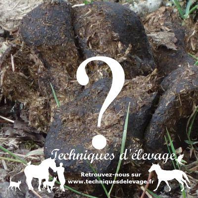 L'analyse de crottin pour le poulain : à quel âge ?