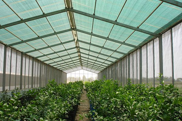 Irrigation is the important element of Greenhouse Farming