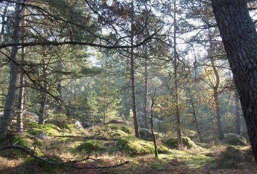 Que la Forêt est belle