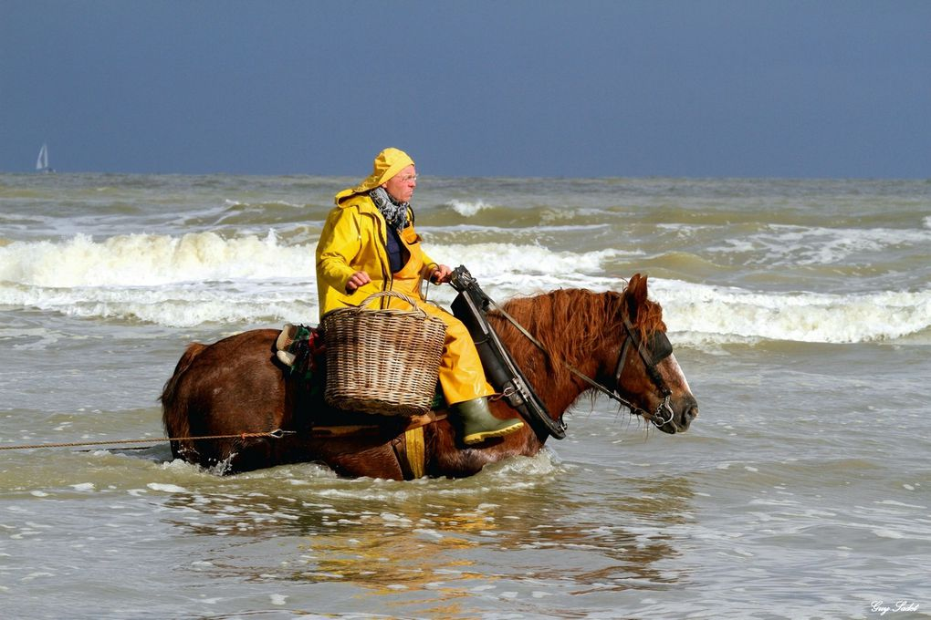 Album - Pêcheurs de crevettes à cheval Oostduinkerke