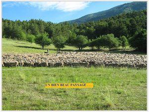 Les sonnailles du long ruban de brebis serpentant sur les sentiers montagneux de notre si belle région de Provence font partie du spectacle de cette nature qui nous enchante.