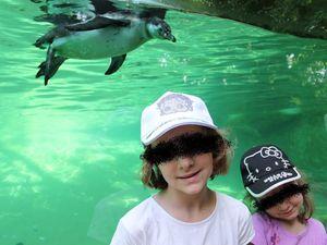 Zoo de Beauval : les manchots de Humboldt et les lamantins