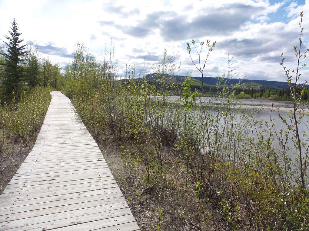 Sur la Klondike Highway - 23 et 24 mai