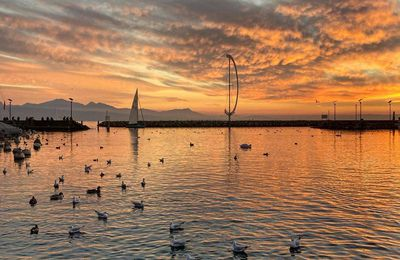 Nature - Lac - Cygnes - Canards - Ouchy - Lausanne - Ville - Picture - Free