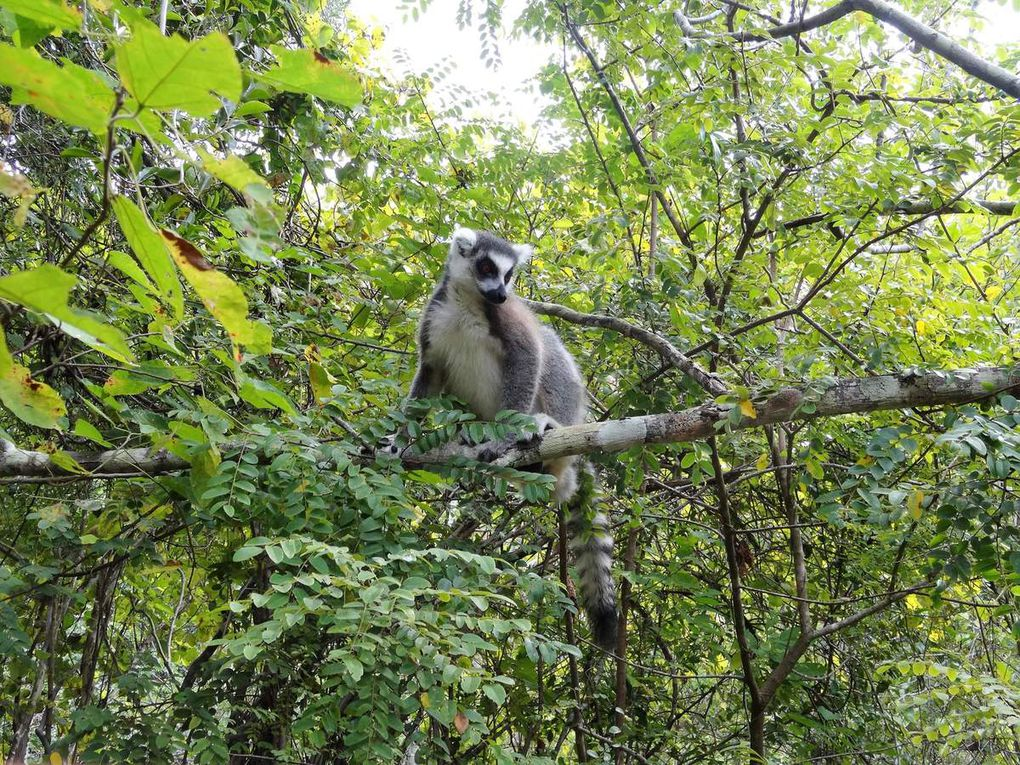 Album photos : Madagascar 2017