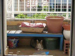 Bubu et son héros Harry, avec Bella profitant du confort et au frais sur le balcon (merci Laura pour les photos)