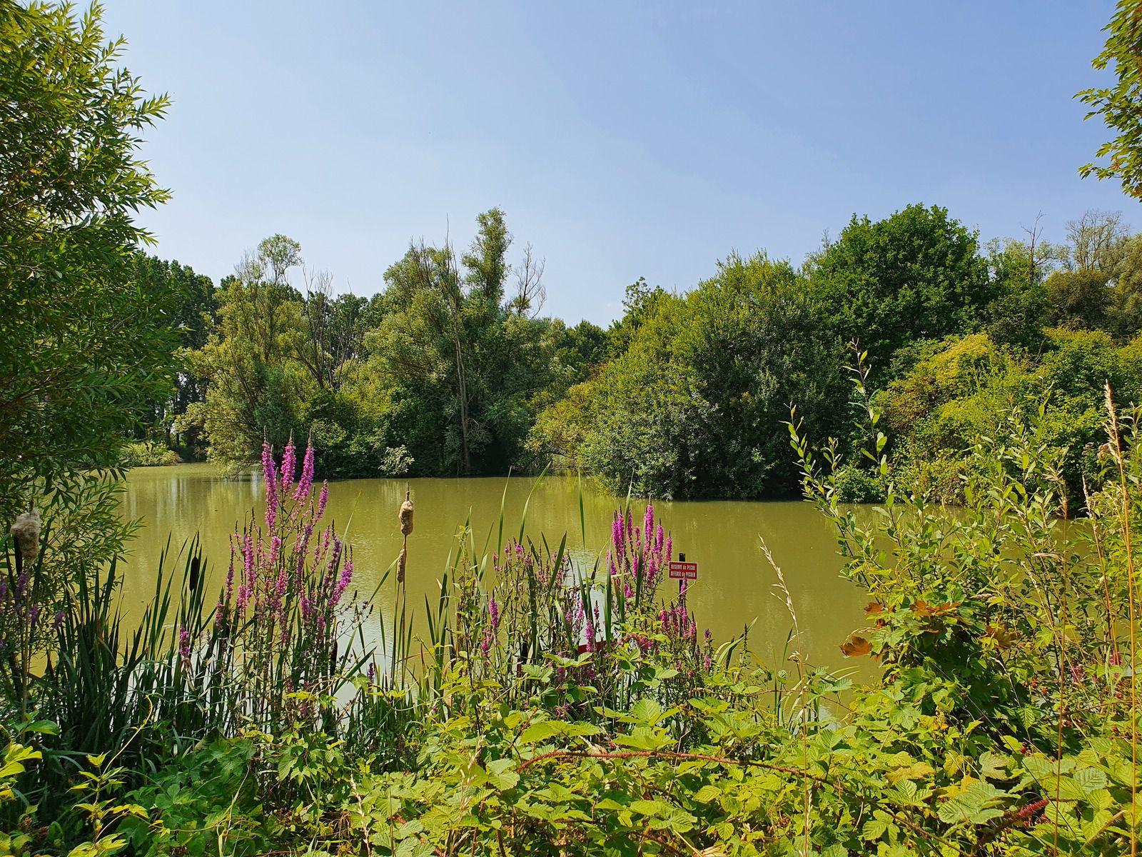Parc de La Louvière, à Don