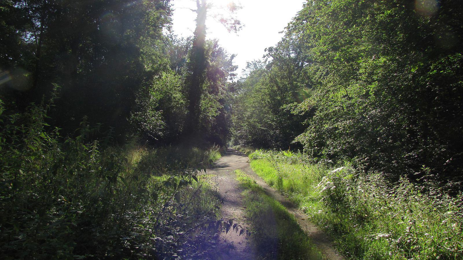 carrefour_Route Eugénie_Chemin de Saint-Corneille