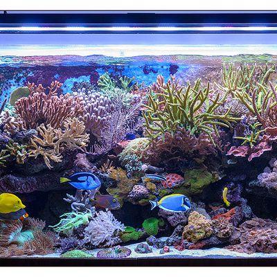 Allestire un acquario marino