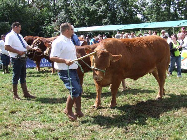 Un concours départemental de bovins limousins à Bignay (Charente-Maritime). Miss Poitou-Charentes était présente à midi pour la remise des prix et des diplômes. Je n'ai pas de photos de l'après-midi...