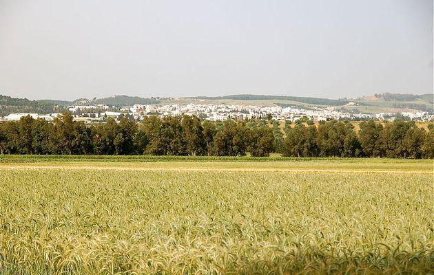 """Le projet """"Reverdir la Tunisie""""   favorise un modèle d'agriculture adapté aux changements du climat."""