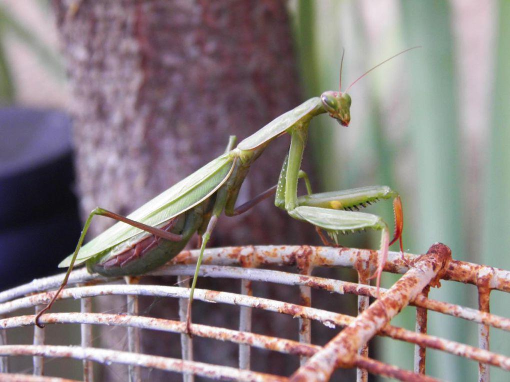Photos du Jardin en Folie de 2011 qui s'est déroulé du 29 Octobre au 1er Novembre...