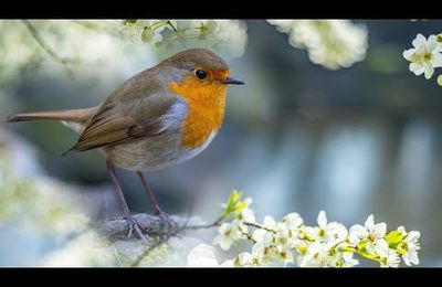 """Peaceful Instrumental Music, Relaxing Meditation Nature Music """"Woodland Birds"""" by Tim Janis"""