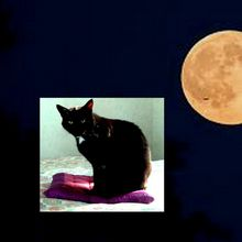 La romance de la Luna Luna