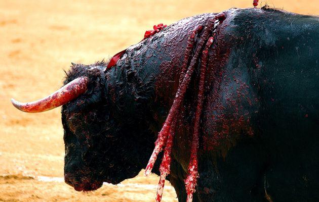 Corridas : torturer des bestioles pour faire marrer des blaireaux