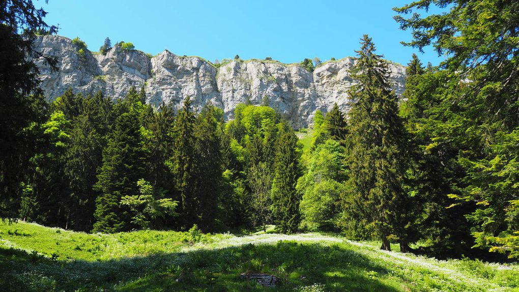 Les falaises calcaires (Wandflue)