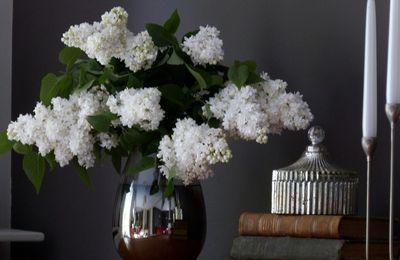 Bouquet de lilas blanc.