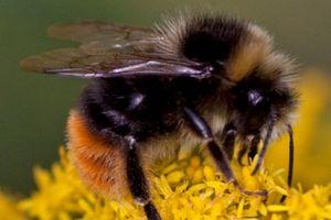 Cliquez pour interdire les tueurs d'abeilles