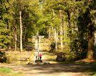 La fête de la Nature en forêt domaniale de Bercé