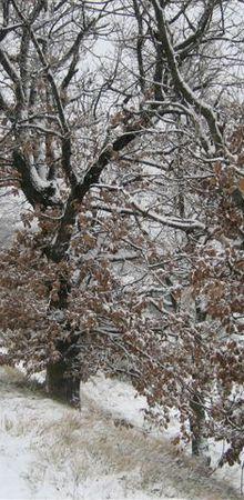 CAP : Les Gardettes dans la neige