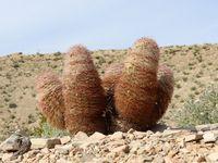 Flore - Fleurs et cactus