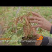 Nouveau film Jardin-Jardinier - Jard'infos