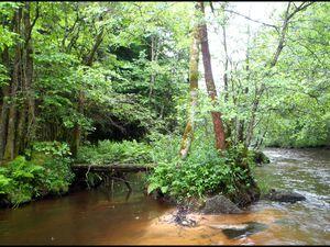 La Cure, une superbe rivière....