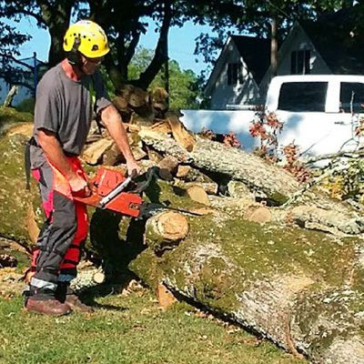 Appointing A Tree Removal Service? Ask These Following Questions