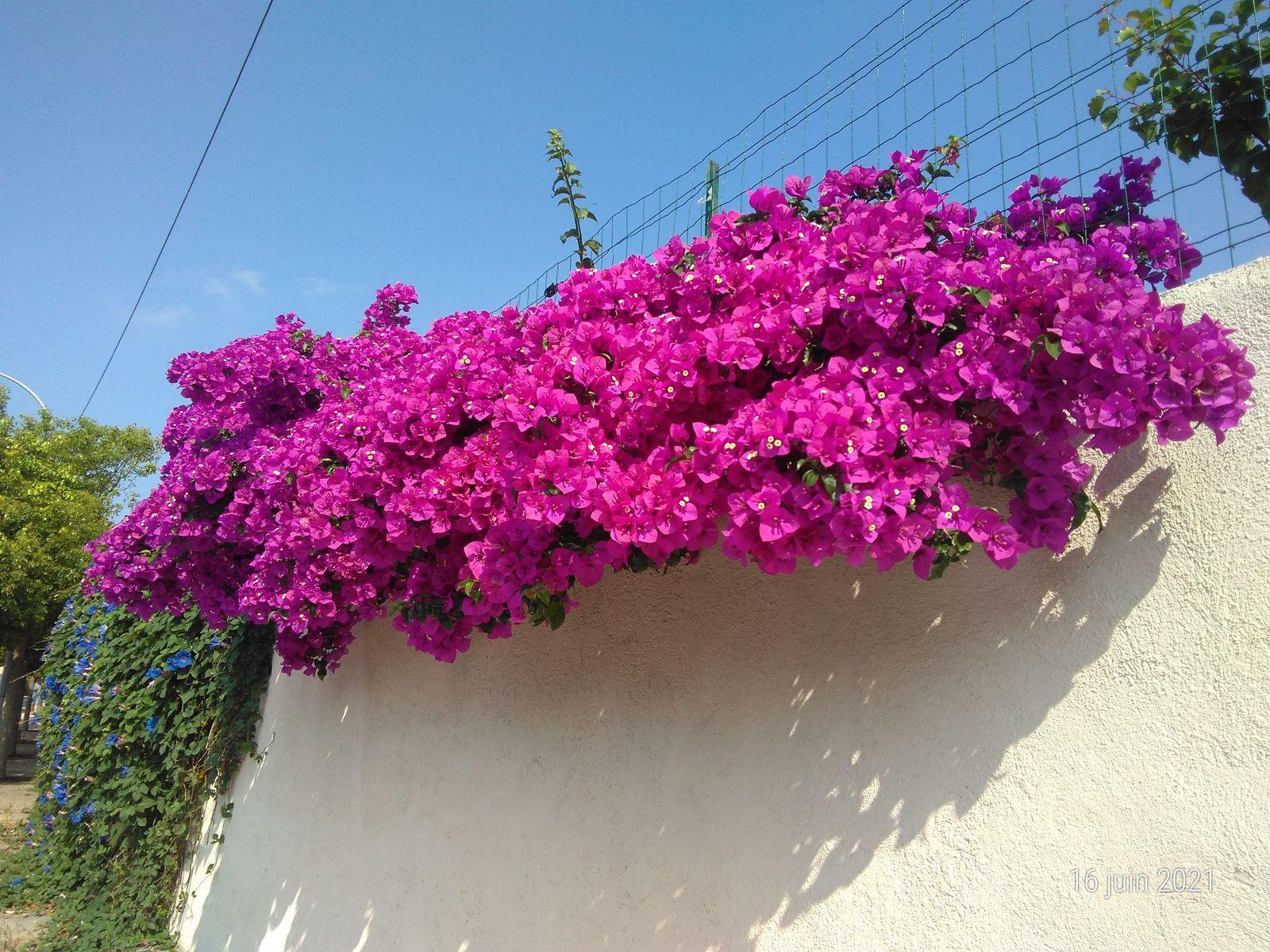 De belles fleurs