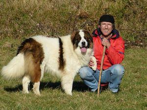 Le Tornjak ?  Un incroyable berger originaire de Bosnie et de Croatie…