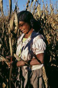 La globalización del mercado de comida ha hecho que ésta sea barata, pero ¿quién se beneficia?
