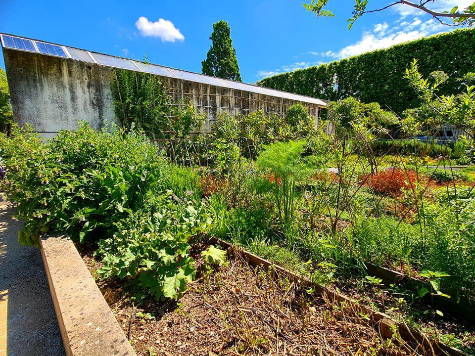 """J'ai testé la visite commentée """"Le jardin des plantes d'Orléans déménage!"""""""