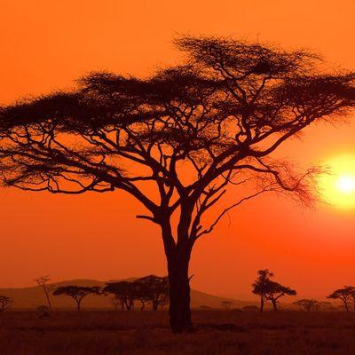 Dimanche sous le ciel d'AFRIQUE