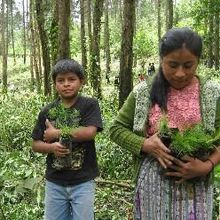 Guatemala: Jóvenes indígenas lanzan campaña para sembrar 5 millones de árboles en un día