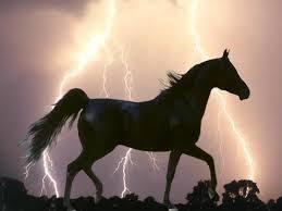 Les chevaux et l'équitation...