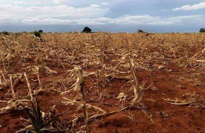 FAMINE  A  MADAGASCAR