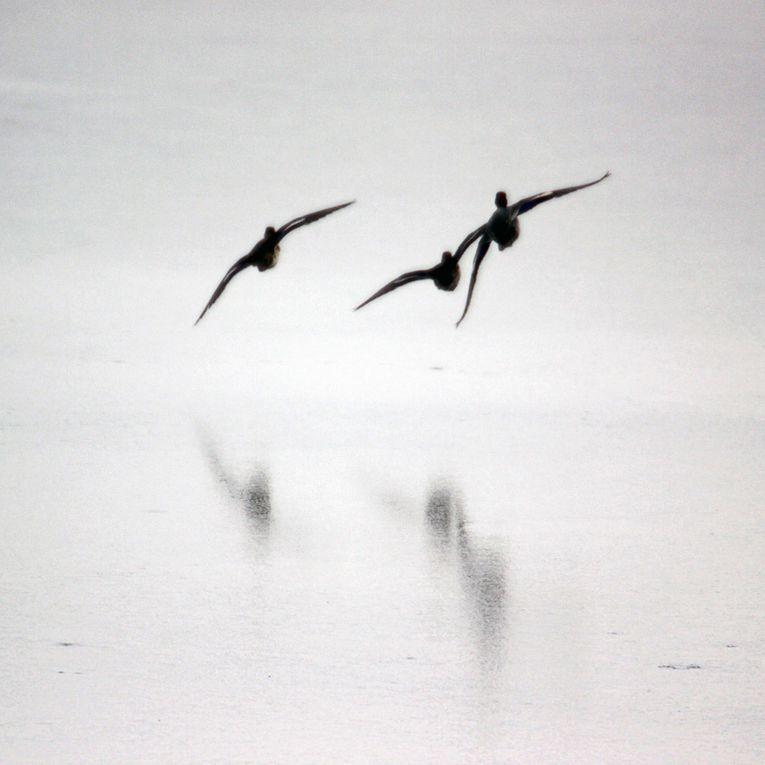 Album - Photos-Nature