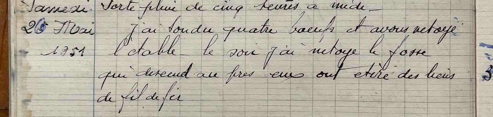 Samedi 26 mai 1951 - quatre boeufs tondus