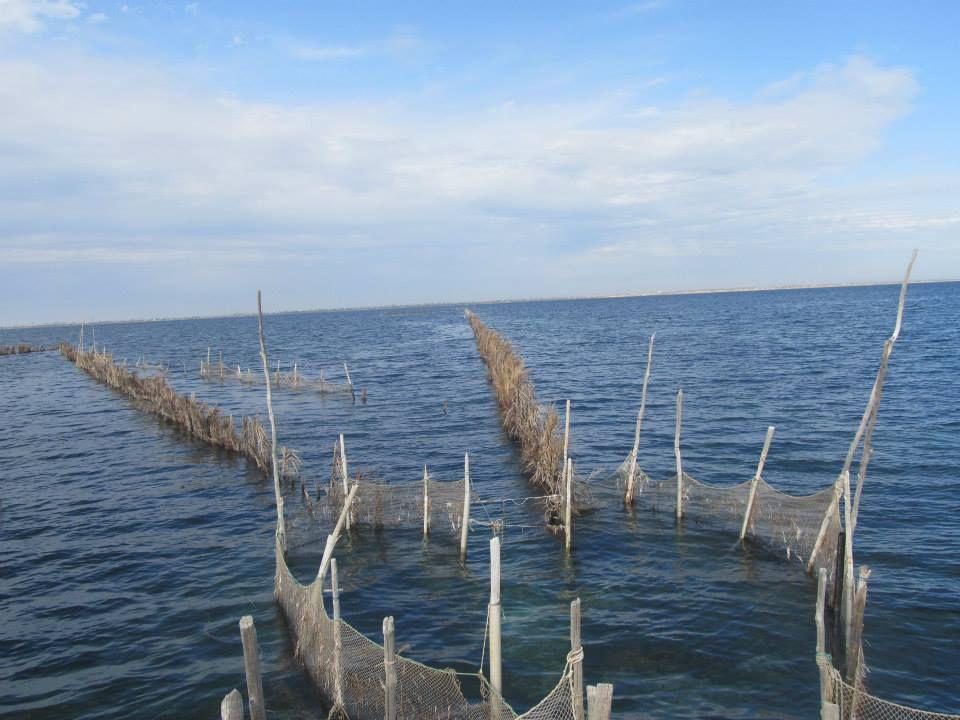 La pêche à la charfiya au patrimoine de l'Unesco, une victoire pour la Tunisie !