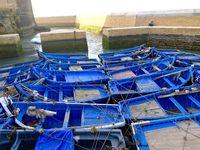 Les barques bleues sont indissociables d'Essaouira, un peu comme les tulipes le sont de la Hollande. Elles ne sont pas seulement une décoration, mais aussi l'outil des pêcheurs...bichonnées, choyées, aimées, admirées, adulées et surtout protégées, elles sont les petites stars du ports et se laissent admirer et photographier comme de véritables actrices de cinéma.