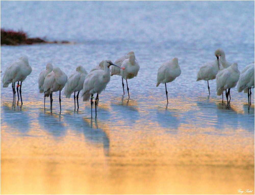 Située sur les rives du bassin d'Arcachon, près de l'embouchure de l'Eyre et parfaitement nichée au coeur du parc naturel régional des Landes de Gascogne, la réserve ornithologique du Teich occupe une position stratégique sur l'une des
