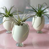 Natural Blue Eggs Used As Planters With Air Plants - Our Crafty Mom