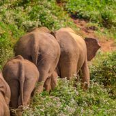 13 rescued elephants need your help