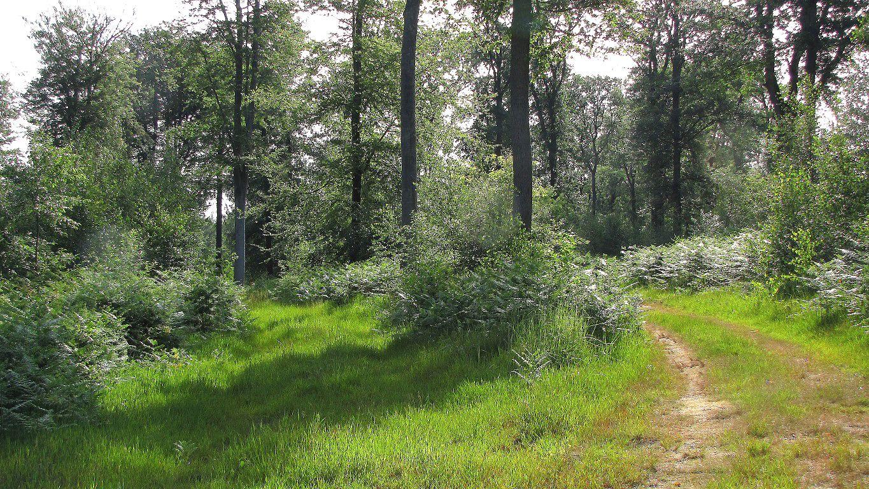 carrefour_Chemin du Fau Bidaud_Chemin du Plessis-Brion