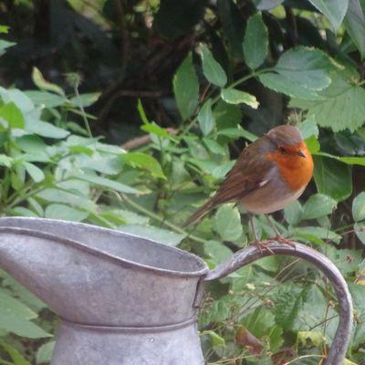 Les oiseaux sont des poèmes...