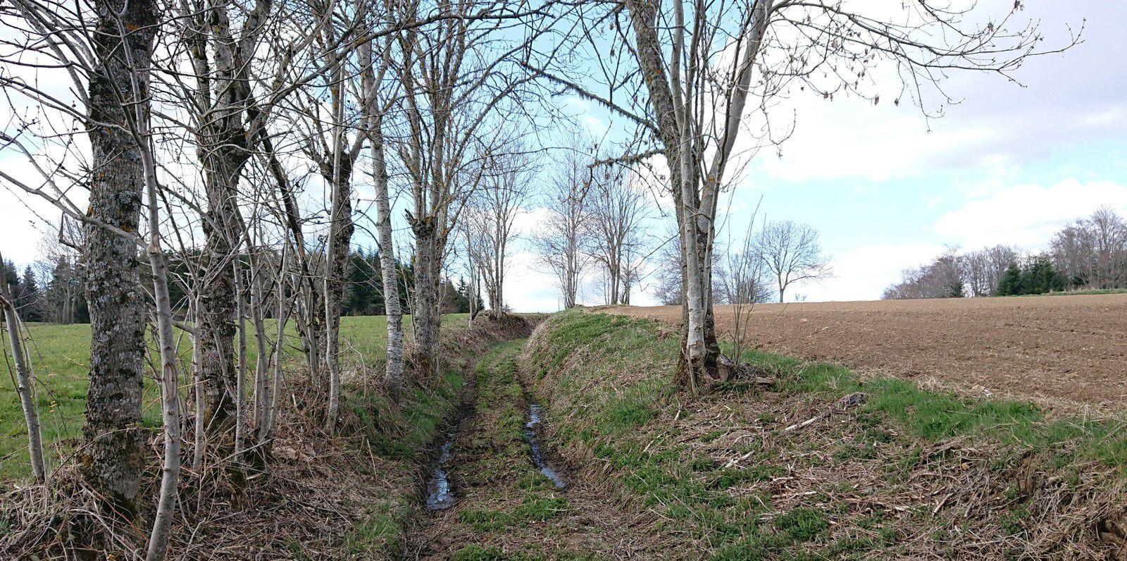 Protection des petits chemins de l'eau : chemin à conserver en secteur en cours de céréalisation (Jax, 43230)