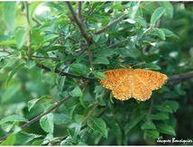 Insectes Auvergnats