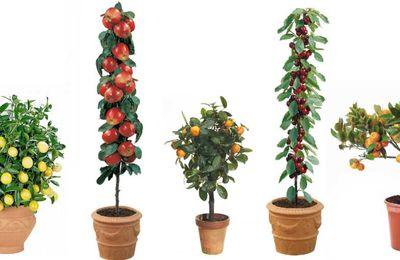 VIDEO ¿Cómo plantar árboles frutales?